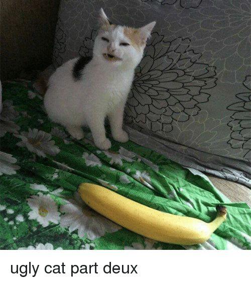 J ugly cat part