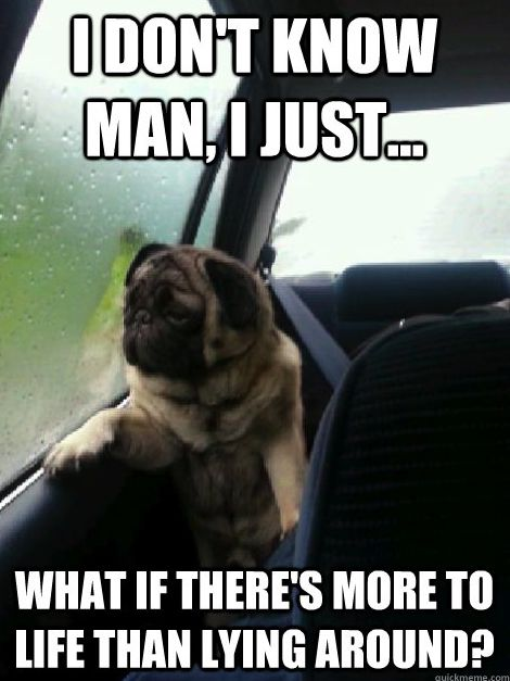 The Very Best of the Introspective Pug Meme