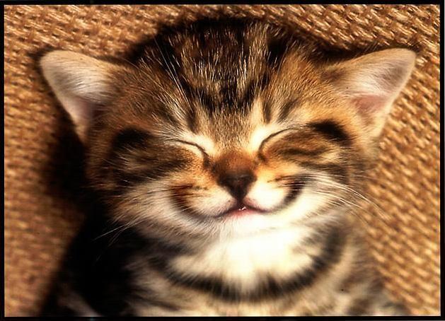 Cat Happy Birthday Meme Happy Birthday Animals Funny Cat Birthday Wishes Happy