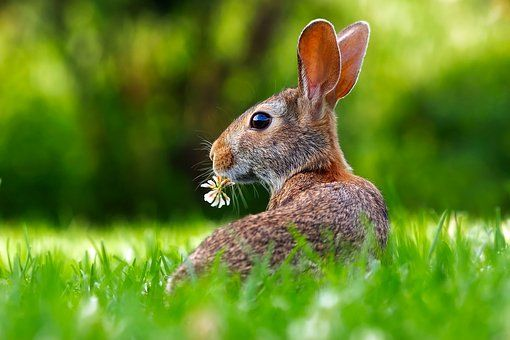 Rabbit Hare Animal Cute Adorable