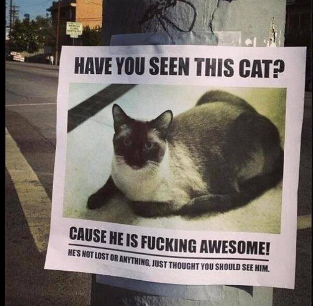Lost cat poster Not lost only awesome Super funny