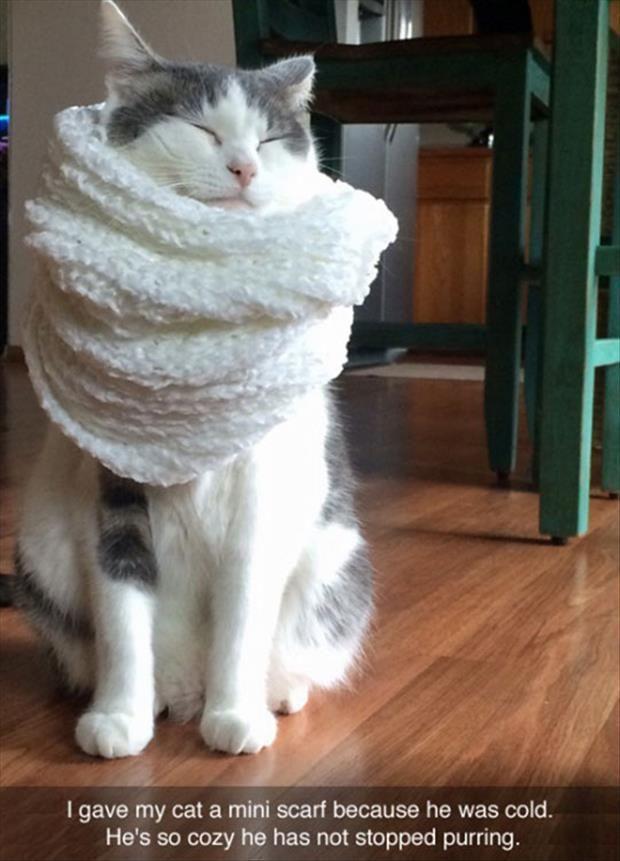 Top 30 Funny Cat Memes Funny memes