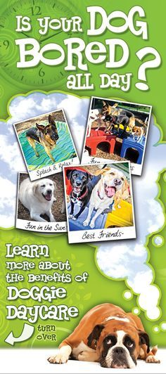 Karnik Doggie Daycare Rack Card