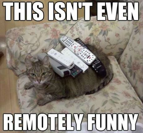 remotely funny cat funny cat pictures with captions