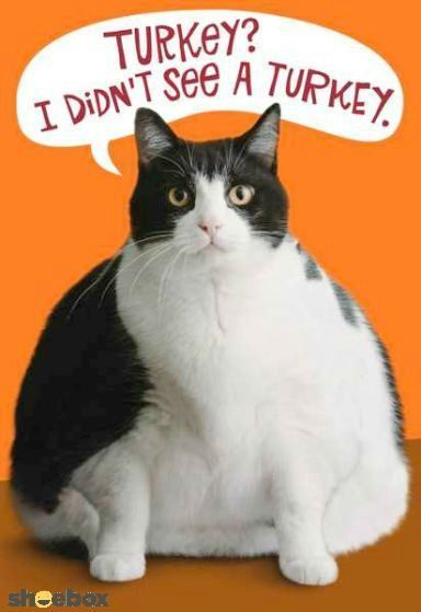 Funny Cat Thanksgiving Quote