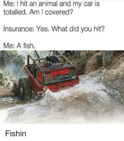 Animal Fish and Jeep Me I hit an animal and my car