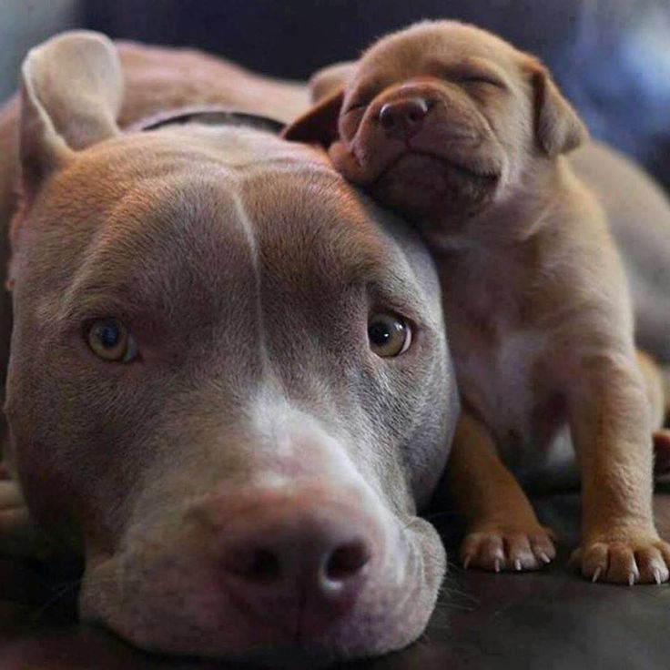 The joy of being a parent Source unknown by cutedogtherapy