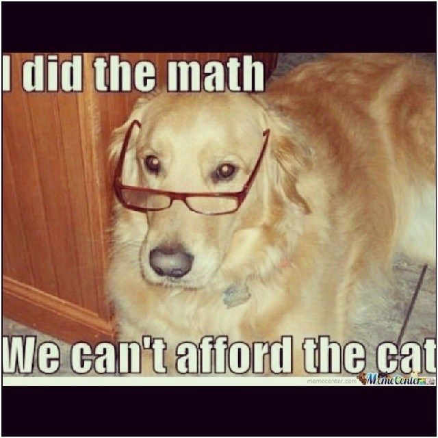 cat Math FUNNY