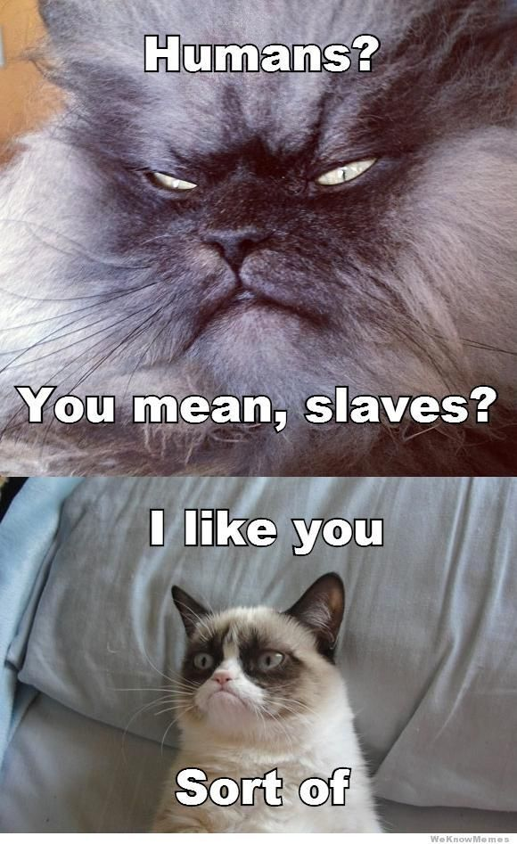 Grab Hold Of the Elegant Funny Inappropriate Pictures Grumpy Cat