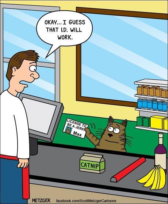 Cat Jokes Cats Humor Funny Cat Memes Funny Cats Hilarious Funny