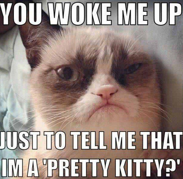 Funny cat memes guaranteed to make you gigglefunny pictures 607x593 Grumpy cat school memes
