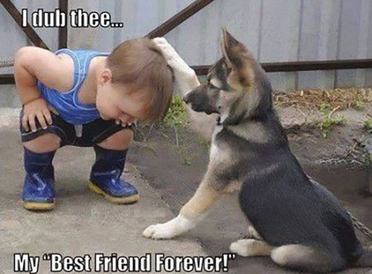 Dog and baby friendship meme