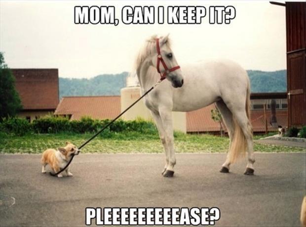 Funny Cute Horse Dog Cute Horses