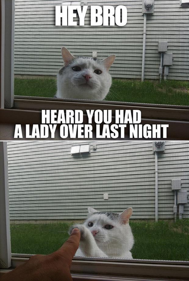 Top 30 Funny Cat Memes Jokes
