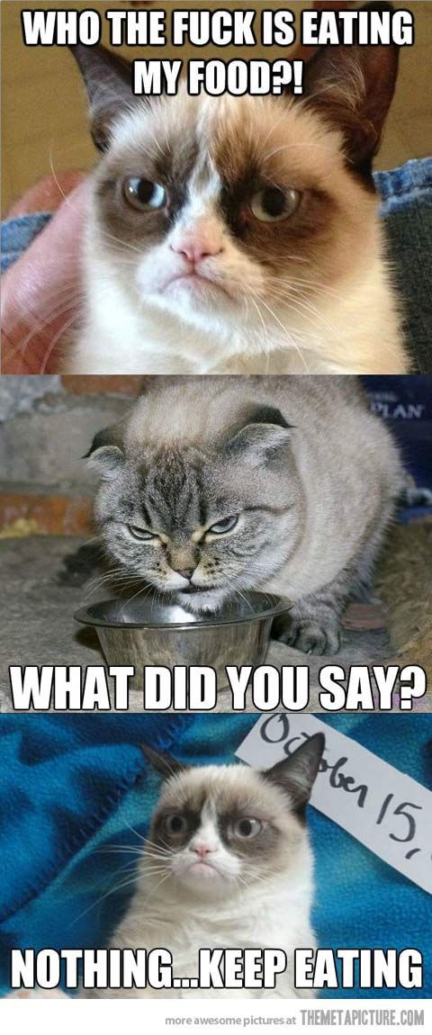 Who s eating Grumpy Cat s food That cat looks like my aunt s evil cat haha