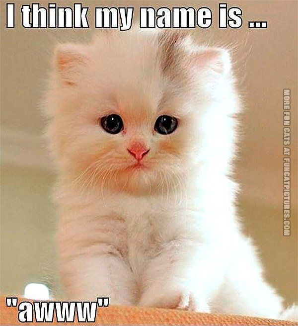 Funny cat pics my name is a