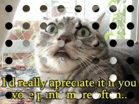 Funny cats pictures Love Cats NO SOUND FOR THE MOMENT BLOOMING COPYRIGHT