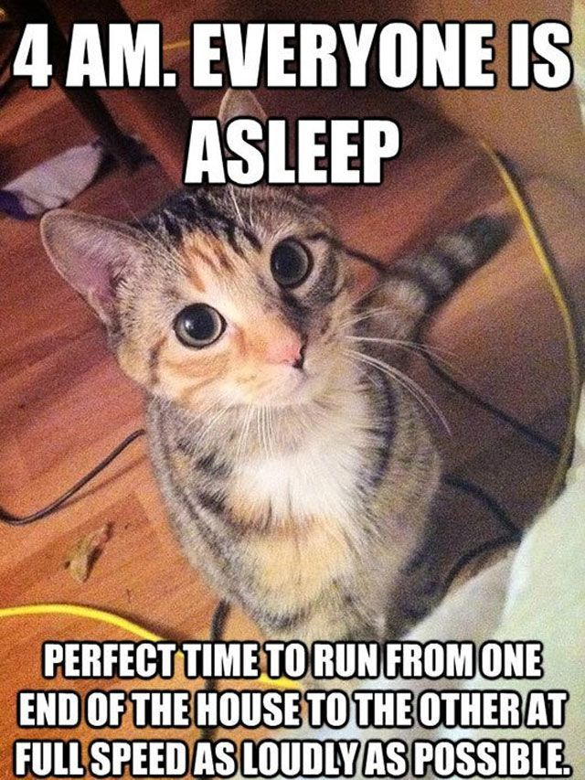 funny capt pictures with captions sayings photos 4am caption