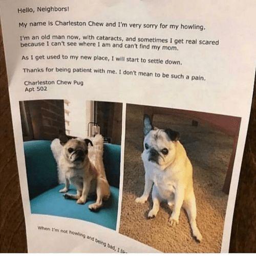 Bad Hello and Memes Hello Neighbors My name is Charleston Chew and
