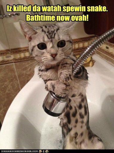 bath bathtime captions Cats do not want kill cats murder over shower showerhead snake water