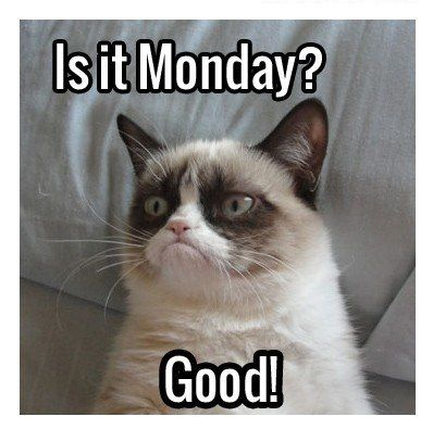 funny picture grumpy cat monday good