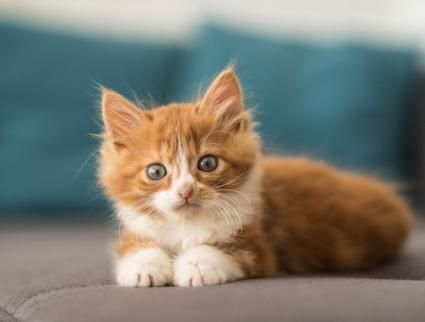 The secret to choosing a cute