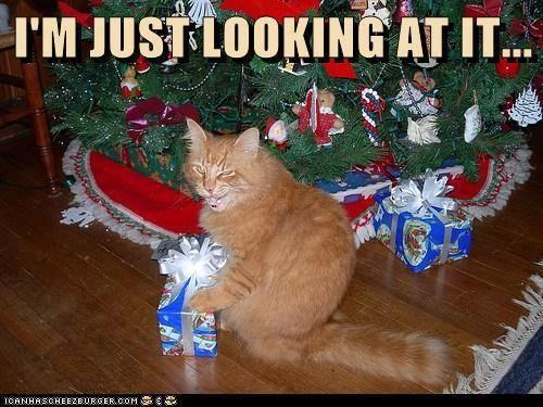 Christmas Cat humor Holiday Christmas