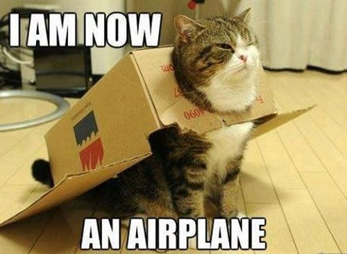 I am an airplane and 20 more funny cat captions Animals Pinterest