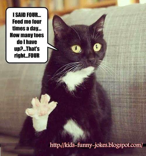 Funny Kids Cat Jokes