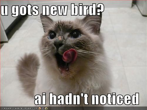 Funny Cats With Captions Cat funny pic Cat funny pics