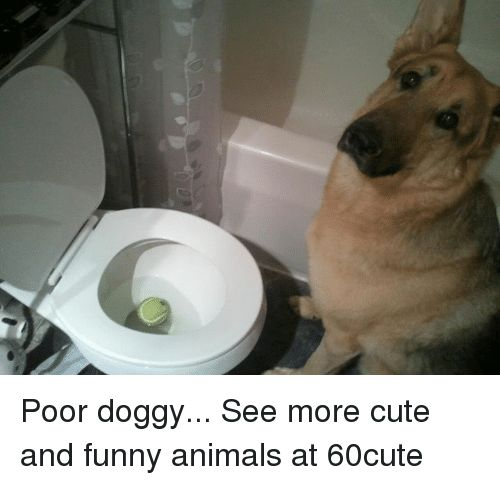 Animals Cute and Dank Poor doggy See more cute and