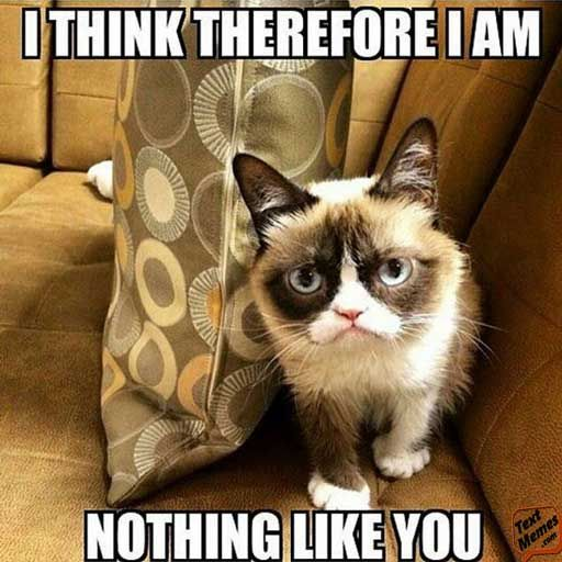 Grab Hold Of the Inspirational Funny Christmas Grumpy Cat Memes