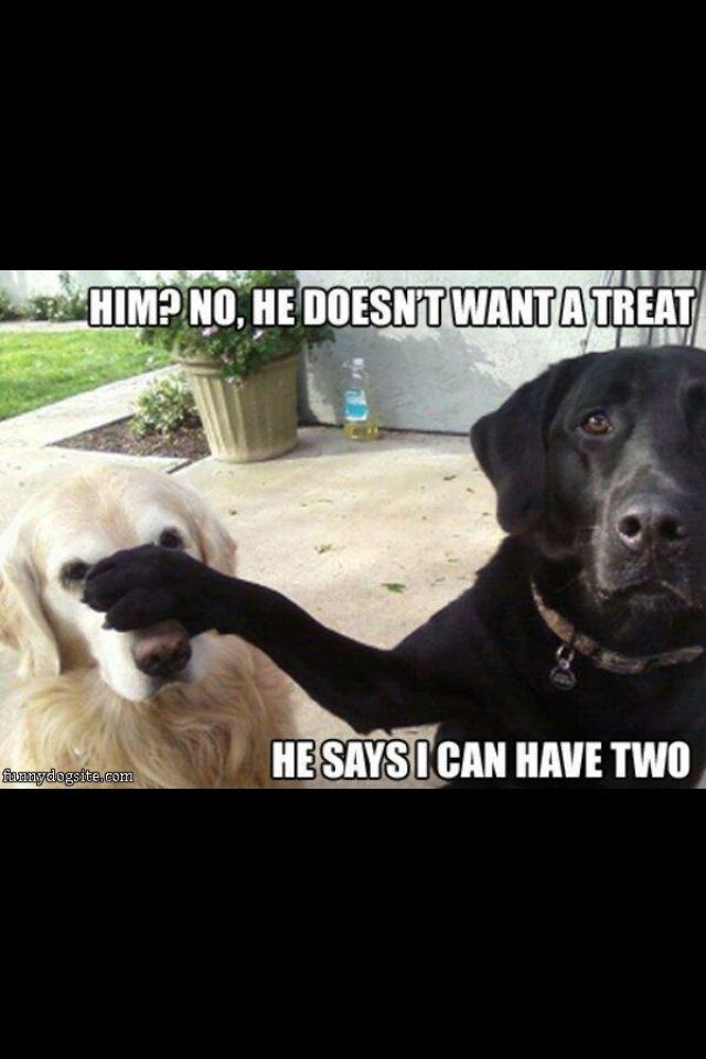 Dogs Funny Dog Sayings Funny Dog Humor Funny Pet Quotes Cute Animal Quotes