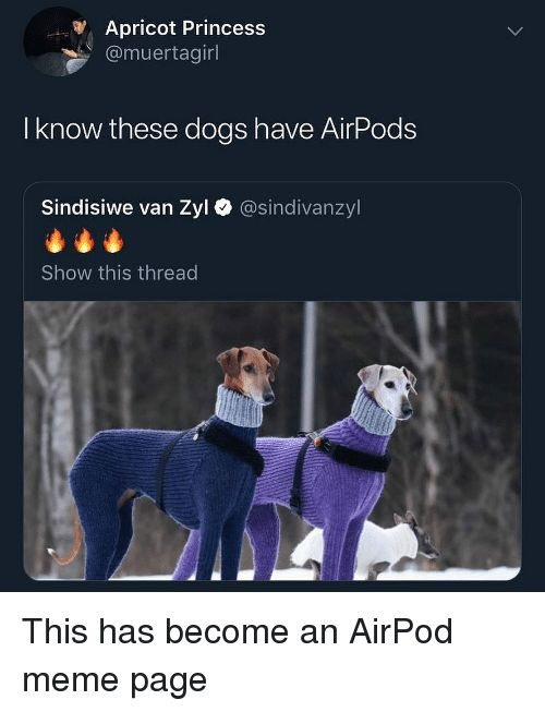 Dogs Funny and Meme Apricot Princess muertagirl I know these dogs have