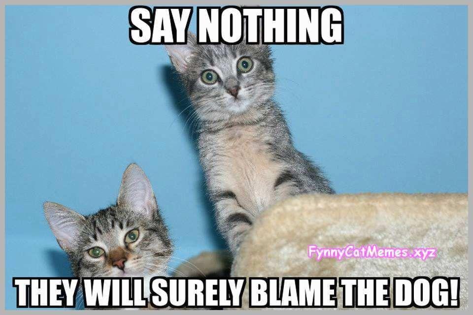 Funny Kitten Memes Admirable Funny Cat Memes the Best Funny Cat Memes Slapwank Funny Kitten