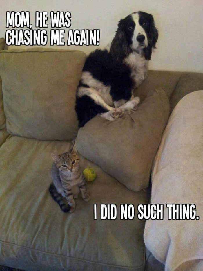 Funny cat vs dog picture Jokes Memes and