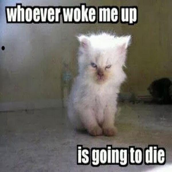 funny kitten memes 28 images i swear i didnt do it