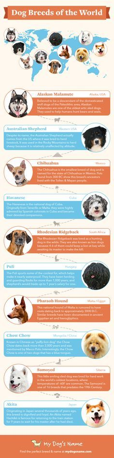 Discover the international origins of some of our most popular dogs today Dog Breed Info