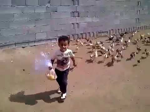 [SO FUNNY] Little boy ting chased by hungry chickens