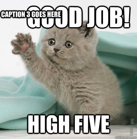 High five Caption 3 goes here High Five Cat quickmeme