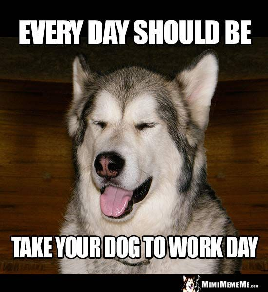 Dog Humor Eery day should be take your dog to work day