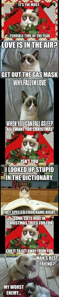 7 Funny Grumpy Cat Memes Collection From Around The World Funny Grumpy Cat Memes Grumpy