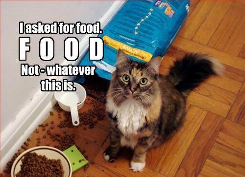 cat whatever food caption