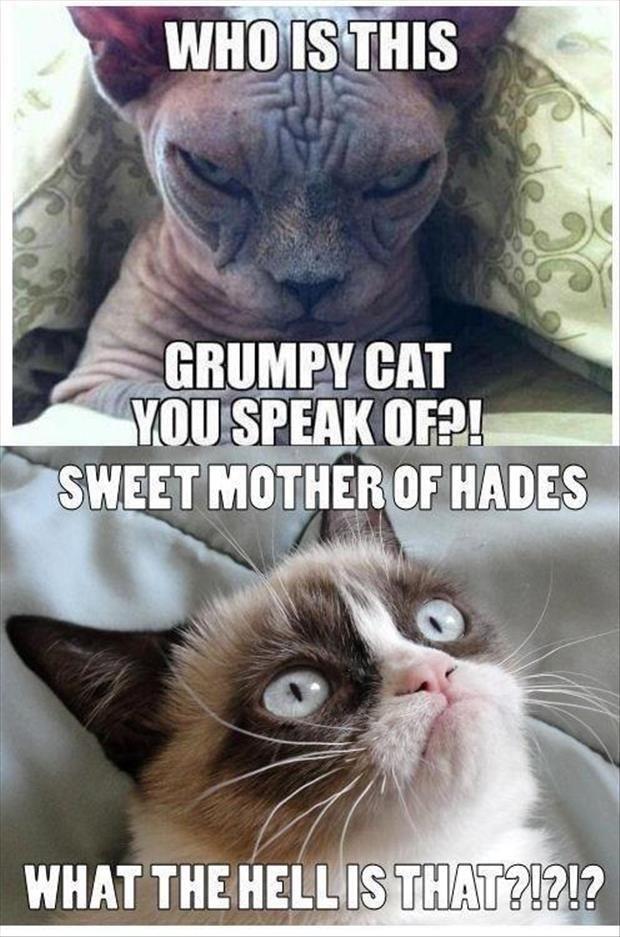 Grumpy cat meets his match