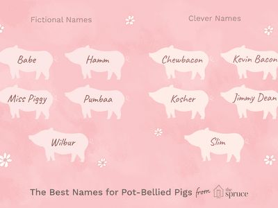 46 Perfect Names for Your Pot Bellied Pig
