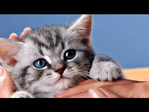 funny cats with captions Youtube Funny Cat Videos short funny videos