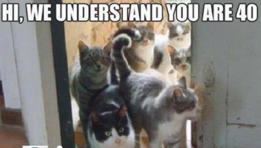 Happy Birthday Cat Meme Funny cat memes