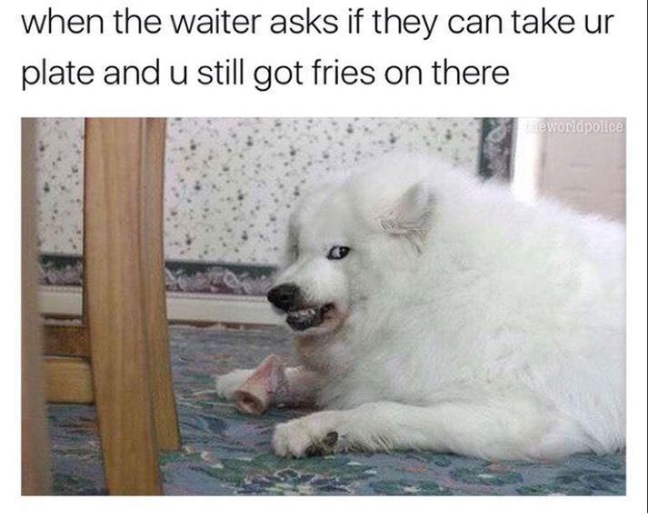 Funny Dog Memes 50 Picsfunny Dog Memes