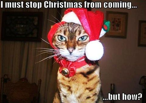 Christmas Funny Cat