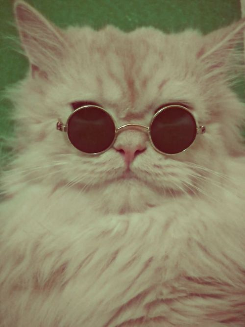 Cool cat Funny Animals Funny Cats Cute Animals Funny Humour Hipster Cat